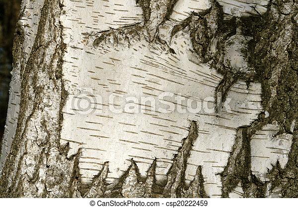 Birch Bark Texture - csp20222459