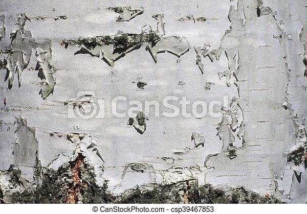 birch bark texture - csp39467853