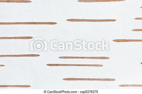 Birch bark texture - csp5376375