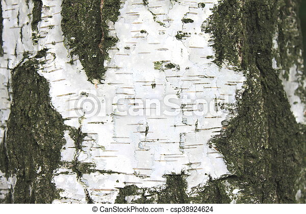 birch bark texture - csp38924624