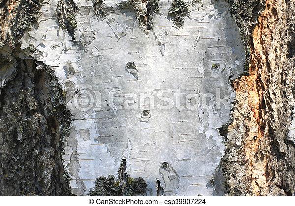 birch bark texture - csp39907224