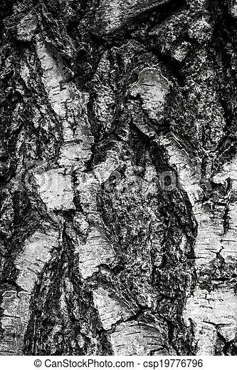 Birch Bark Texture  - csp19776796
