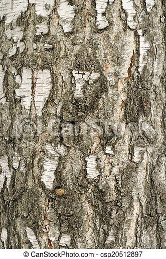 Birch Bark Texture  - csp20512897