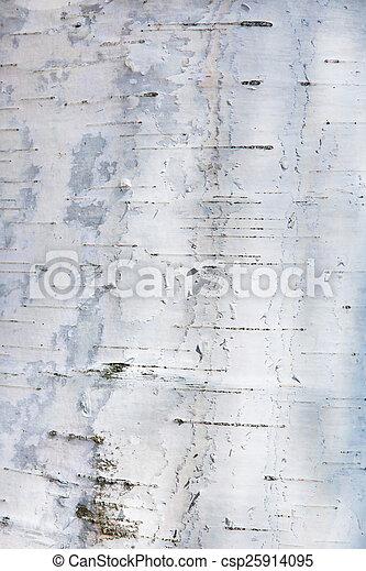 Birch bark texture - csp25914095