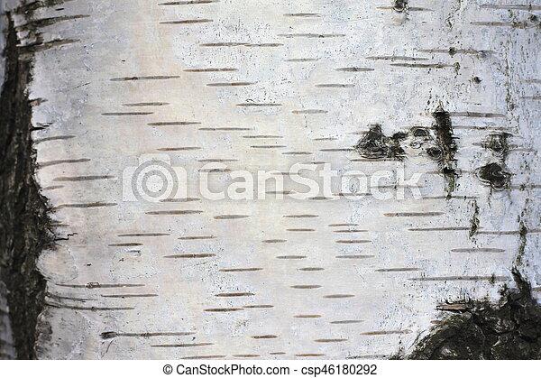 Birch bark texture - csp46180292