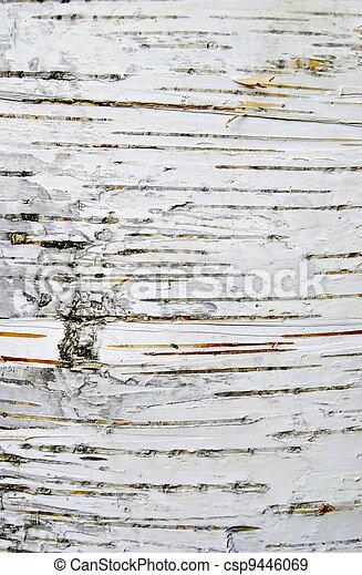 Birch bark texture - csp9446069