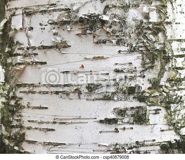birch bark texture - csp40879008