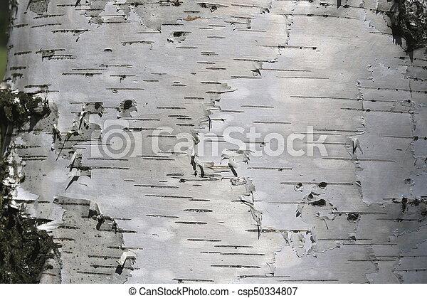 Birch bark texture - csp50334807