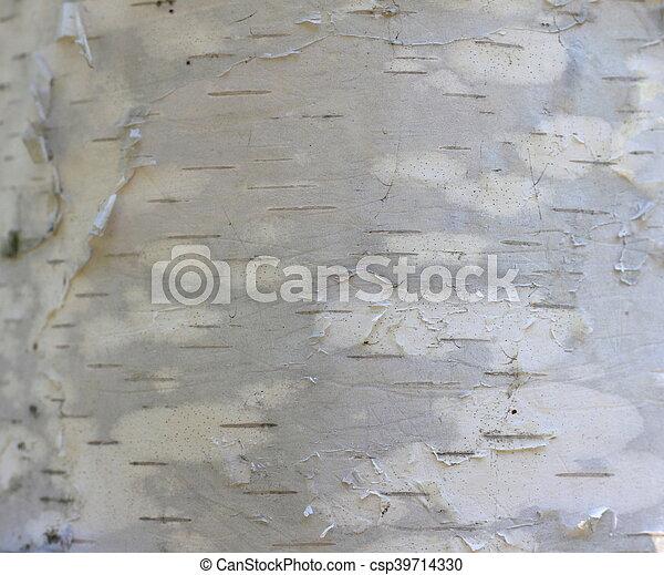 birch bark texture - csp39714330