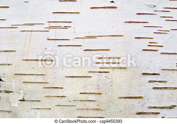 Birch bark texture - csp9455393