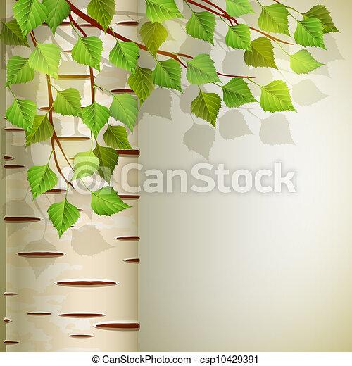 Birch - csp10429391