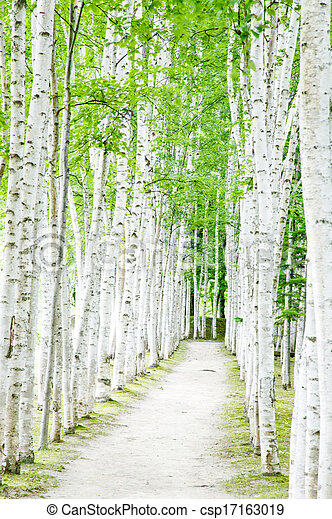 Birch forest trails - csp17163019