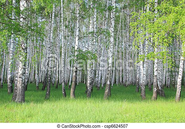 birch grove - csp6624507