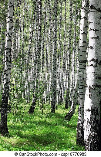 birch grove - csp10776983