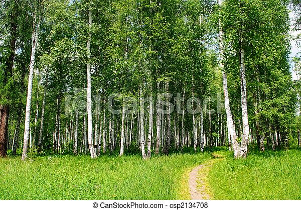 birch grove - csp2134708