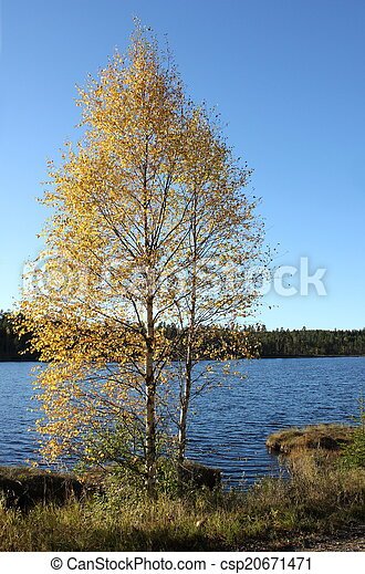 Birch In Front Of Lake - csp20671471
