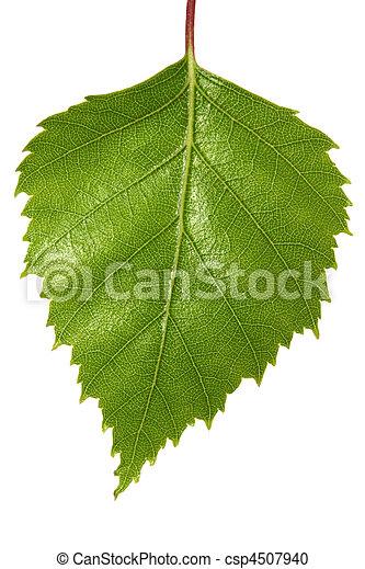 Birch Leaf - csp4507940