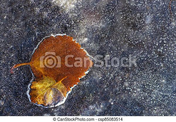 Birch leaves frozen in ice - csp85083514