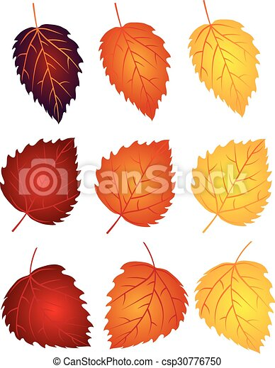 Birch Leaves in Fall Colors Illustration - csp30776750