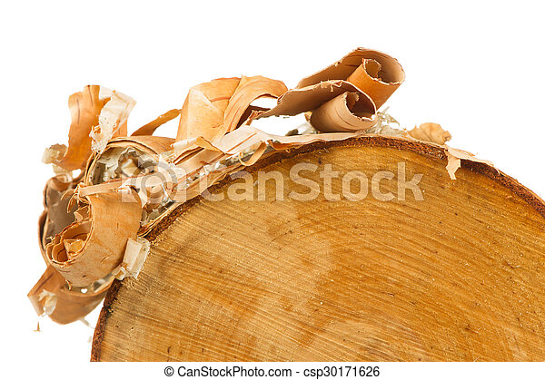 Birch Log with Bark Peels on White Background - csp30171626