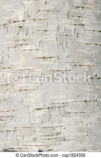 birch texture - csp1824356