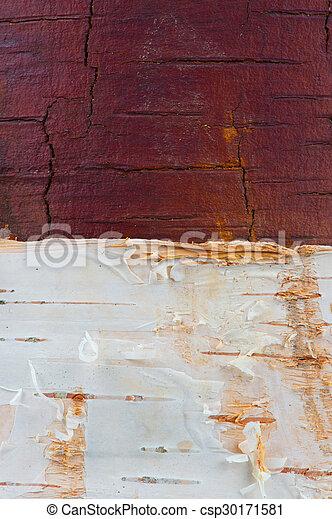 Birch Texture with White Bark - csp30171581
