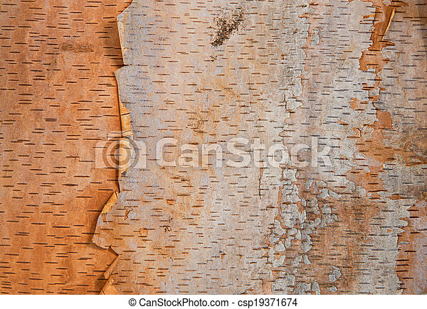 Birch tree bark texture background - csp19371674
