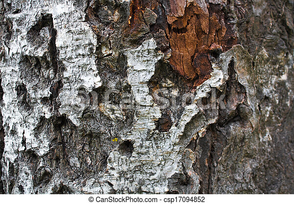 Birch tree bark texture - csp17094852