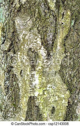 Birch tree bark texture - csp12143008