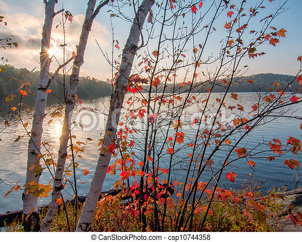 Birch Trees in Autumn Colors In front of Lake - csp10744358