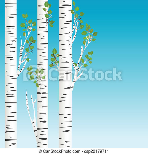 birch trees with green leaves background rh canstockphoto com Birch Tree Trunk Clip Art birch tree clip art free