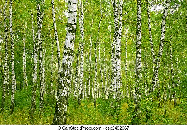 Birchs - csp2432667