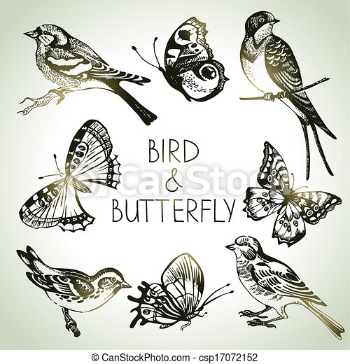 Bird and butterfly set, hand drawn illustrations  - csp17072152