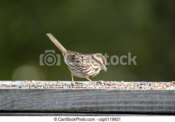 Bird at the feeder - csp0119921