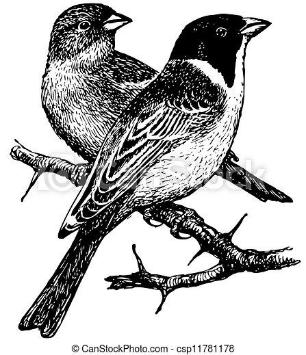 Bird Black Headed Bunting Birds Black Headed Bunting On The Branches