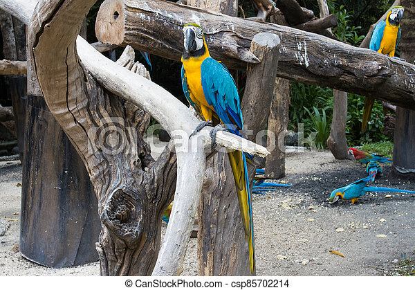 Bird Blue-and-yellow macaw standing on branches - csp85702214