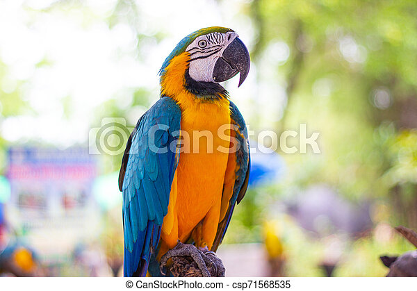 Bird Blue-and-yellow macaw standing on branches - csp71568535