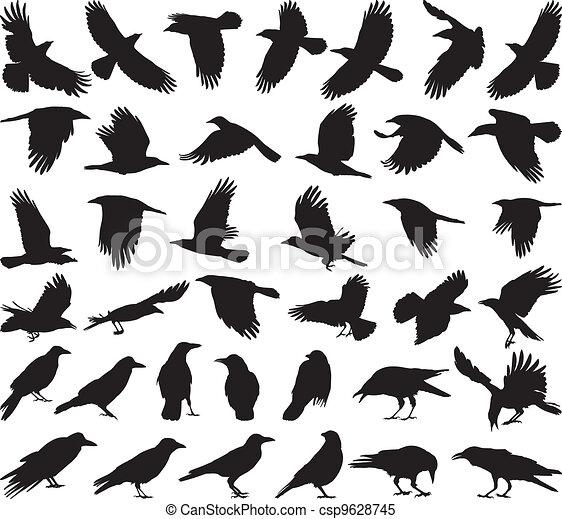 Bird carrion crow - csp9628745