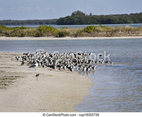Bird Colony On The Seashore - csp18353739