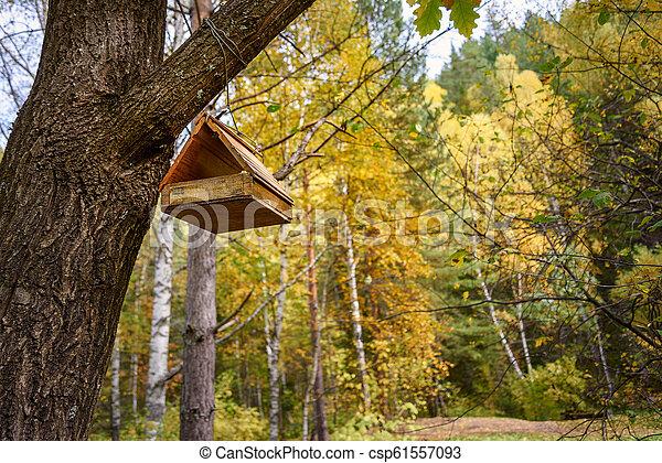 Bird feeder hanging on the tree in autumn - csp61557093