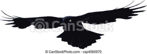 Bird flying high - csp4560970
