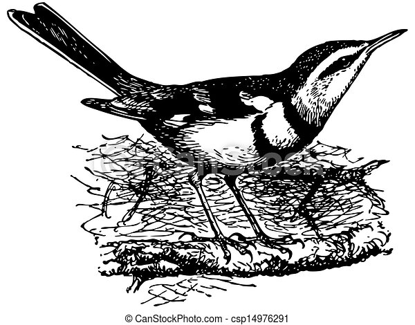 Line Drawing Penguin : Wagtail illustrations and clip art. 88 royalty free