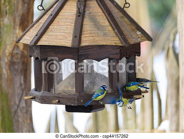 bird great tit in bird house, bird feeder - csp44157262