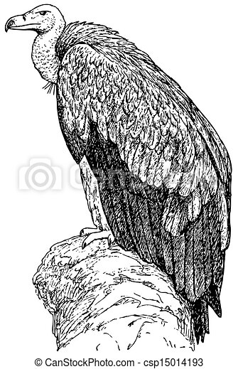 Vulture Line Drawing