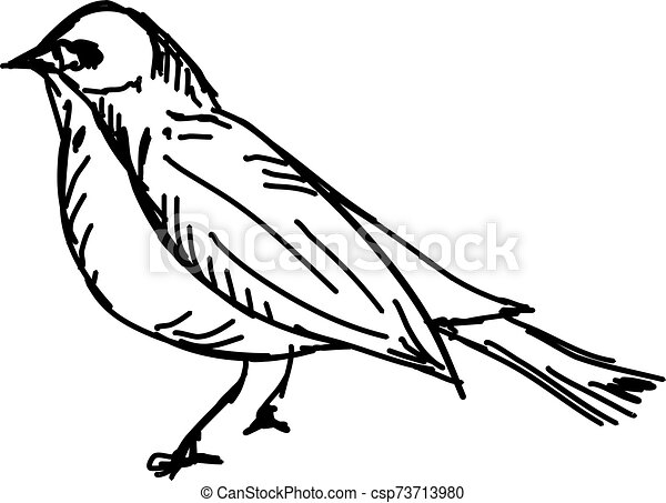 Bird, illustration, vector on white background. - csp73713980