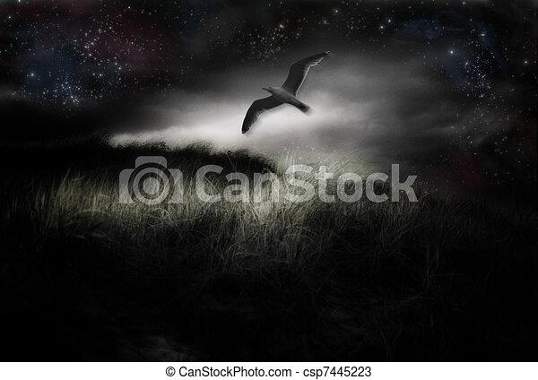 Bird in Flight  - csp7445223