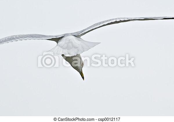 Bird In Flight - csp0012117