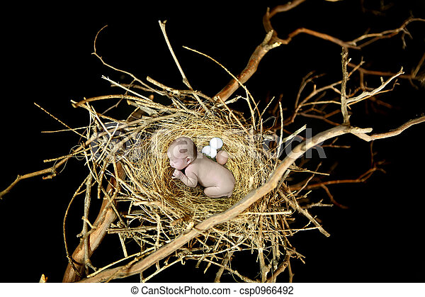 Bird Nest With Sleeping Baby - csp0966492