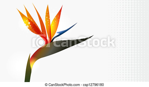 Line Drawing Flower Vector : Bird of paradise flower close up. vector