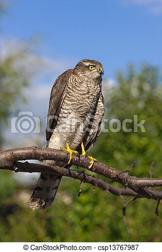 bird of prey on a tree branch - csp13767987